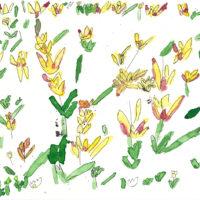 「チューリップ」 2019 年   199×258   水彩、墨、和紙     32,000円(額装済)